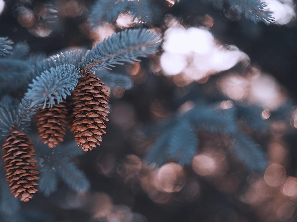 green pine tree leaves in tilt shift lens