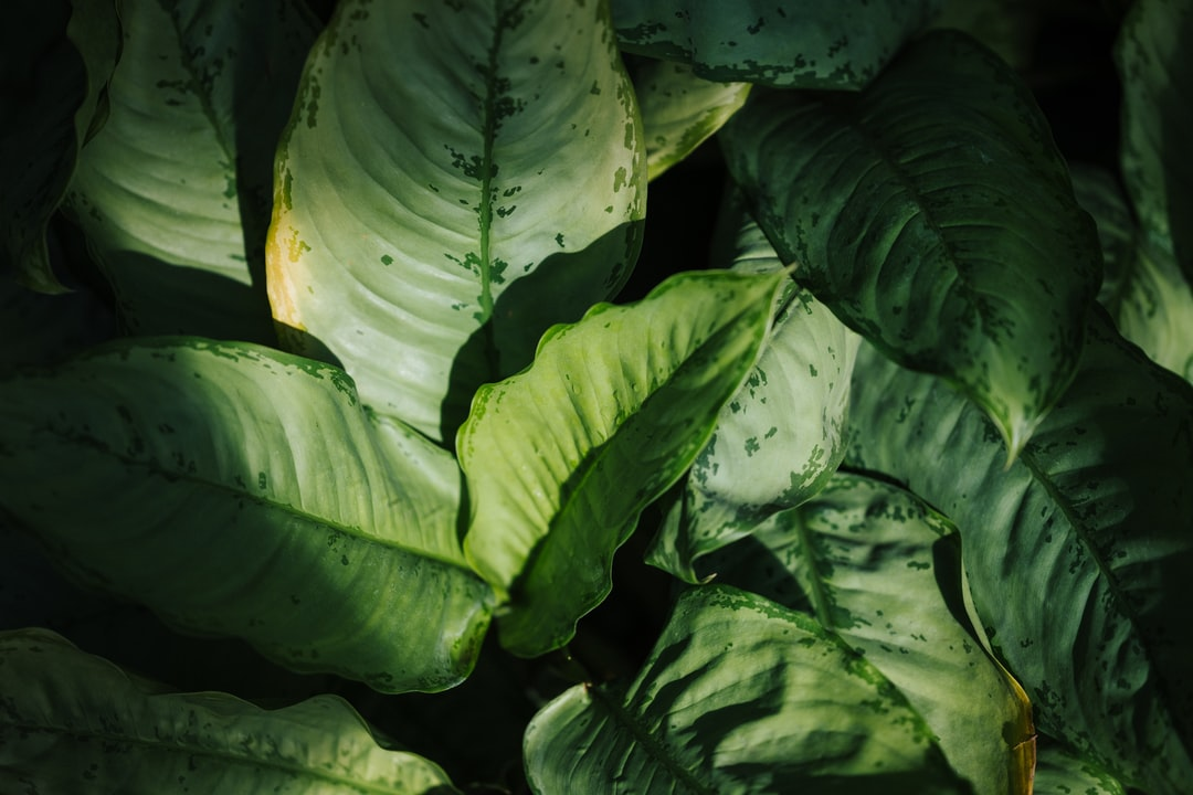 Green Leaves - unsplash