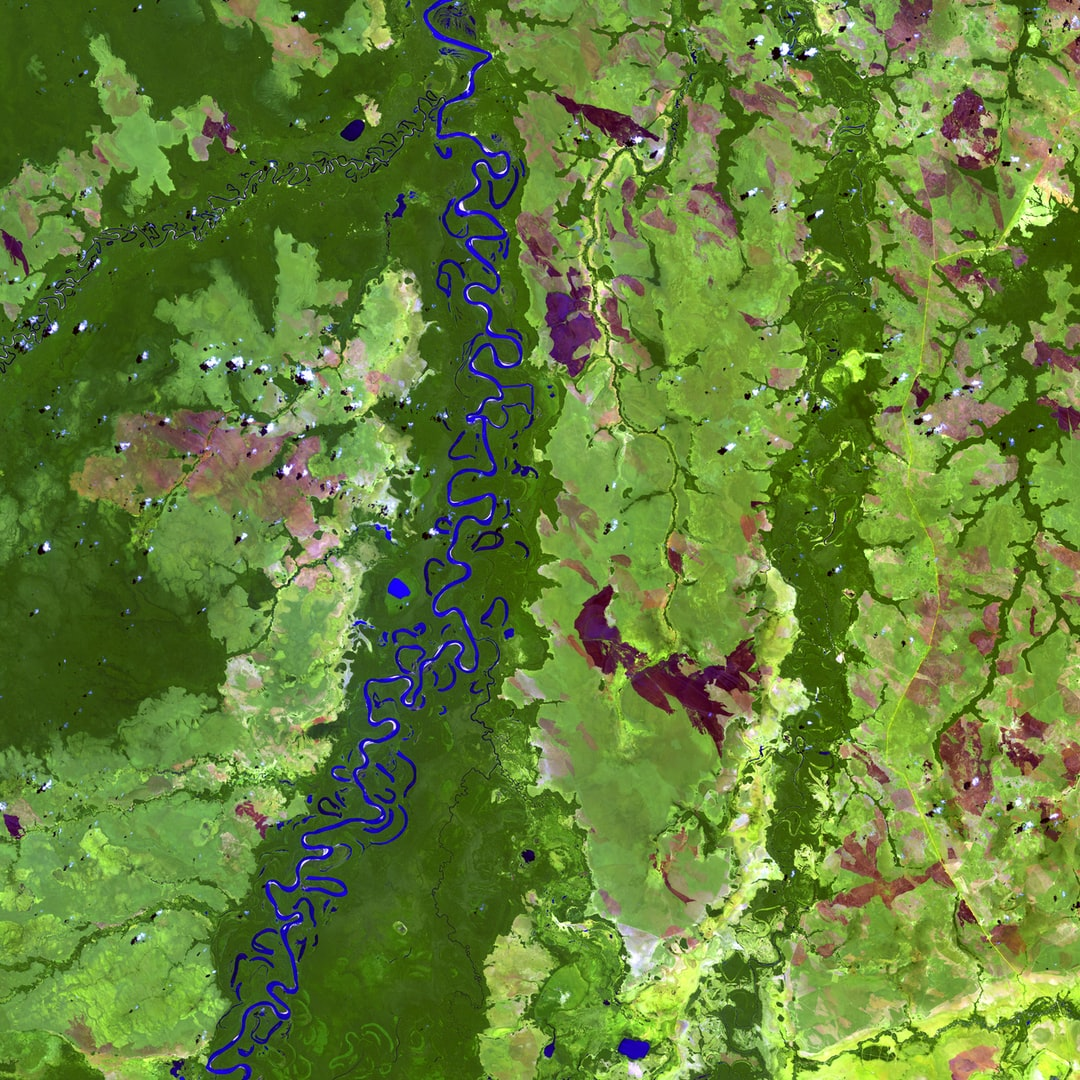 The Beni River in Bolivia resembles a blue ribbon as it meanders toward the Amazon River. Scattered along the river are numerous oxbow lakes, which are curved bodies of water that form when a meander from the main stem of a river is cut off, creating a freestanding body of water. Dark green colors in the image indicate forest and lighter green shades indicate grassland or sparse forest.