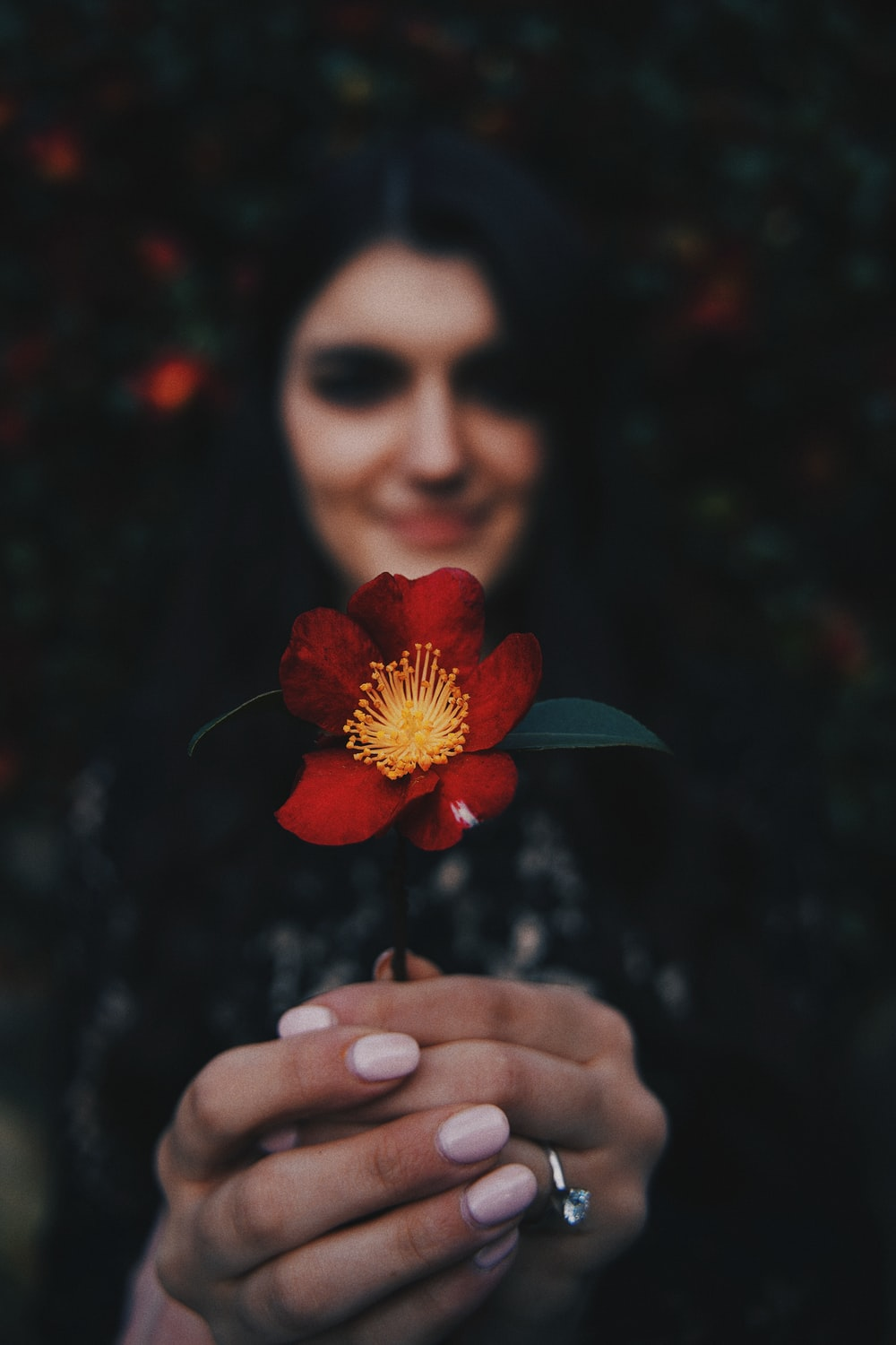 woman holding red flower in close up photography