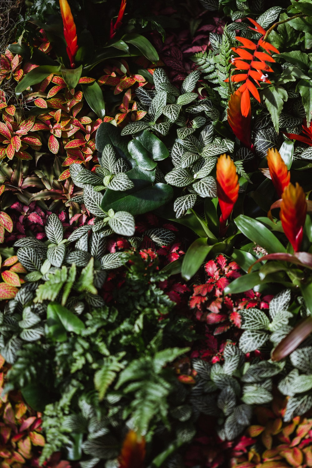 red and green plant with green leaves