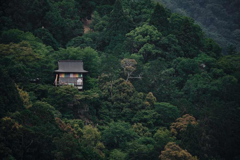 brown wooden house on top of green forest during daytime