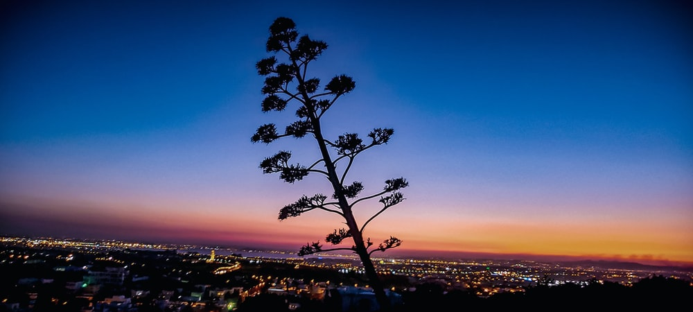 tree near city during sunset