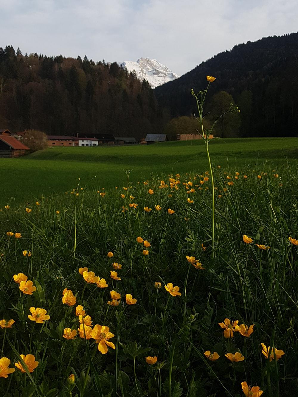 yellow flowers on green grass field near brown mountains during daytime