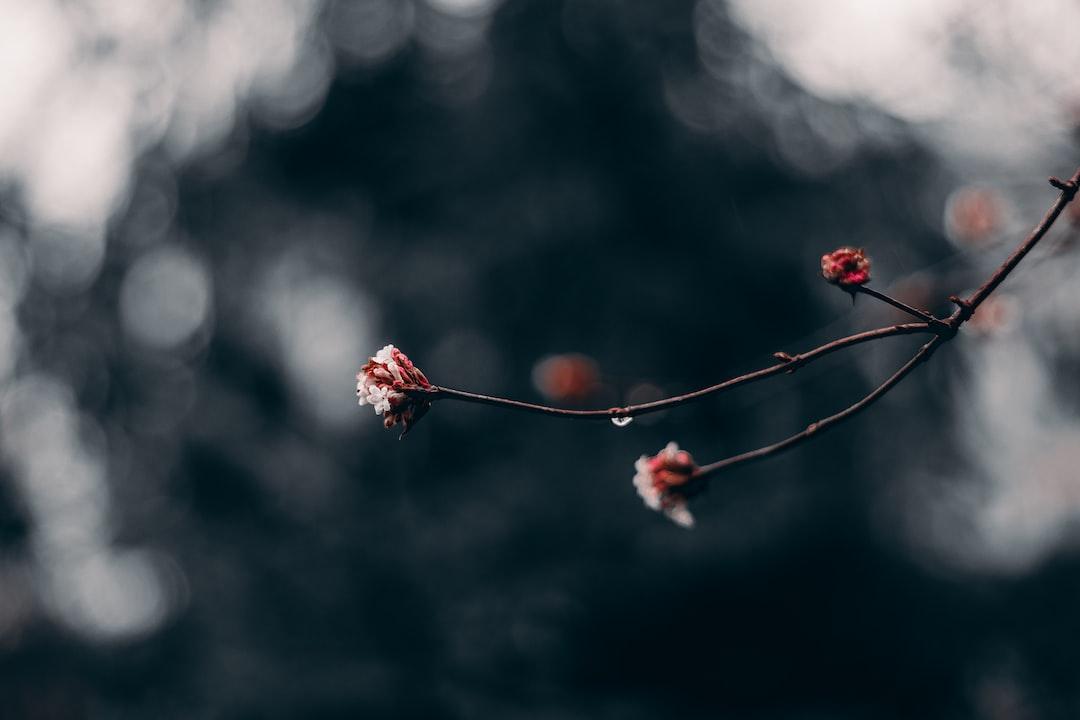 Red Flower Buds In Tilt Shift Lens - unsplash