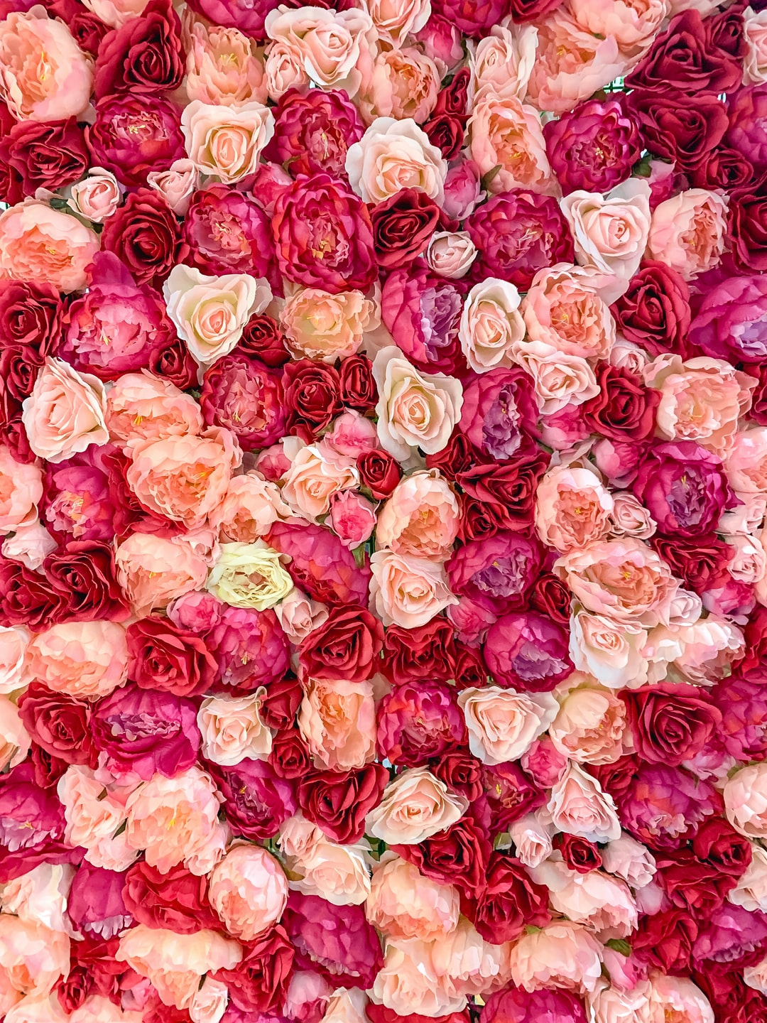 Wall of roses