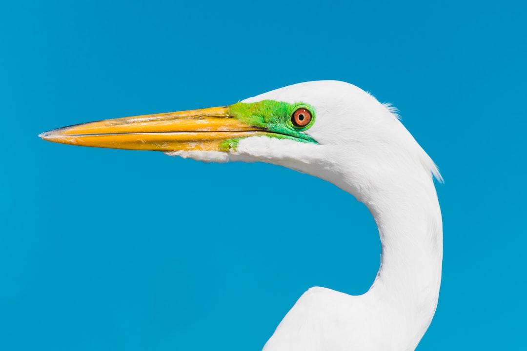 White Bird With Green Eyes - unsplash