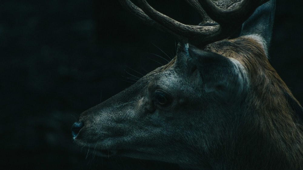 black animal in close up photography