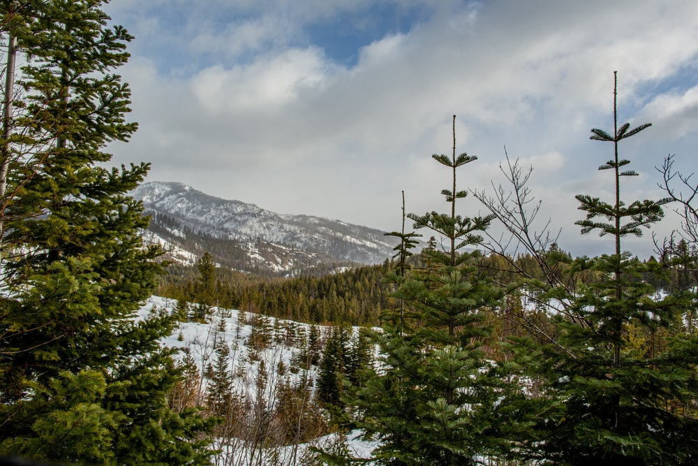 green pine trees near snow covered mountain under cloudy sky during daytime