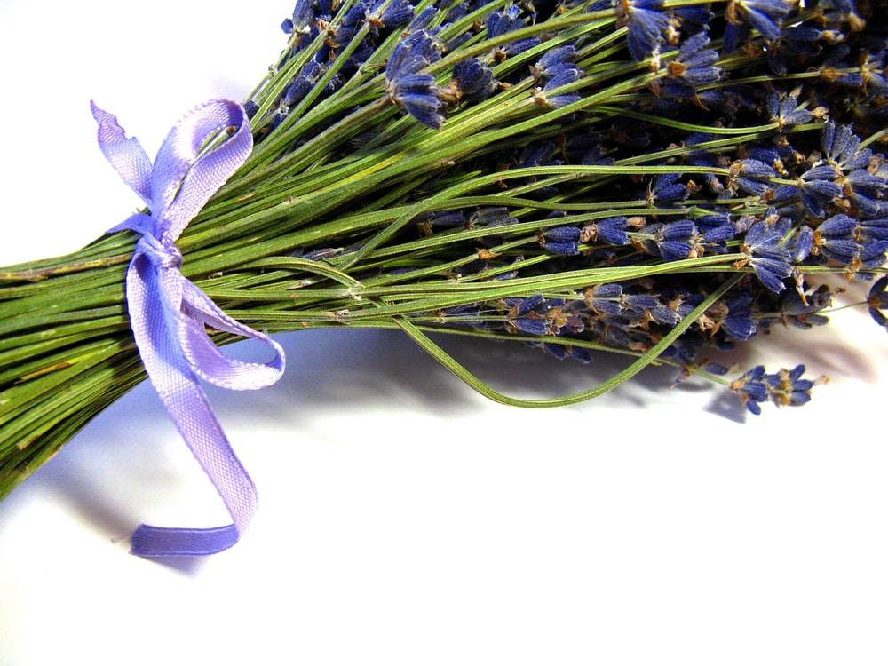 purple and green flower with white background