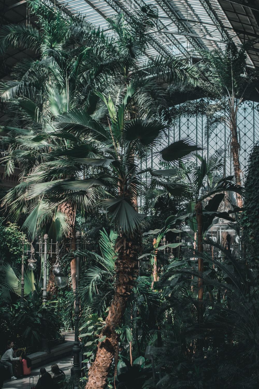 green palm tree inside greenhouse