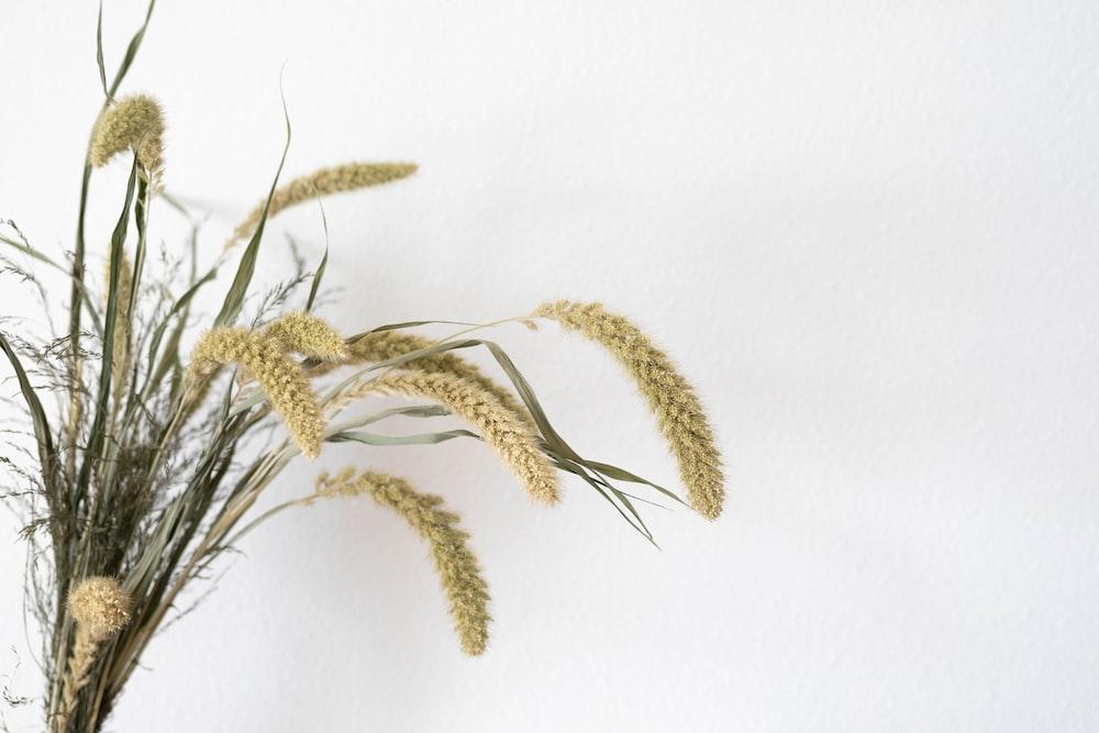 brown wheat on white textile