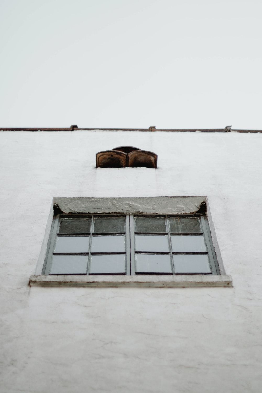 brown horse head on white concrete wall