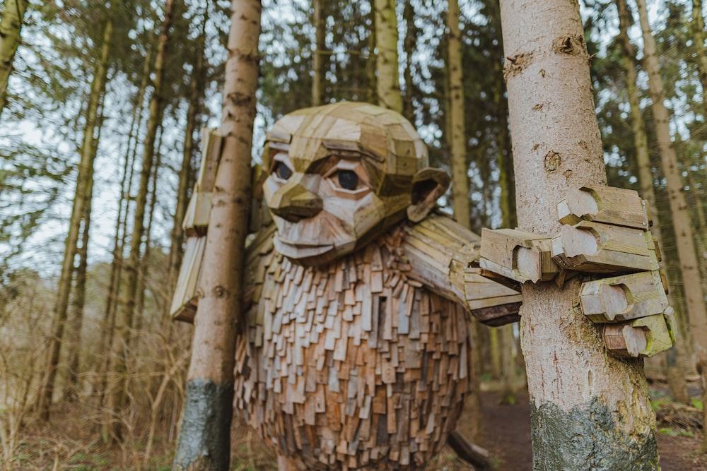 brown wooden human skull on brown tree trunk