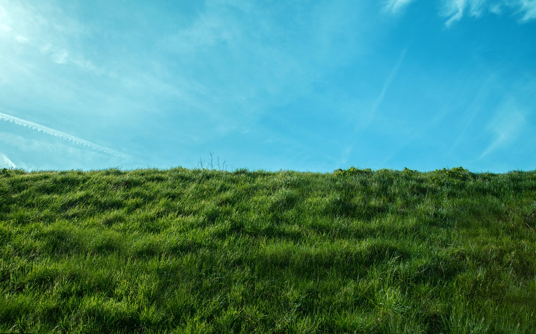 Green grass field under a blue sky.
