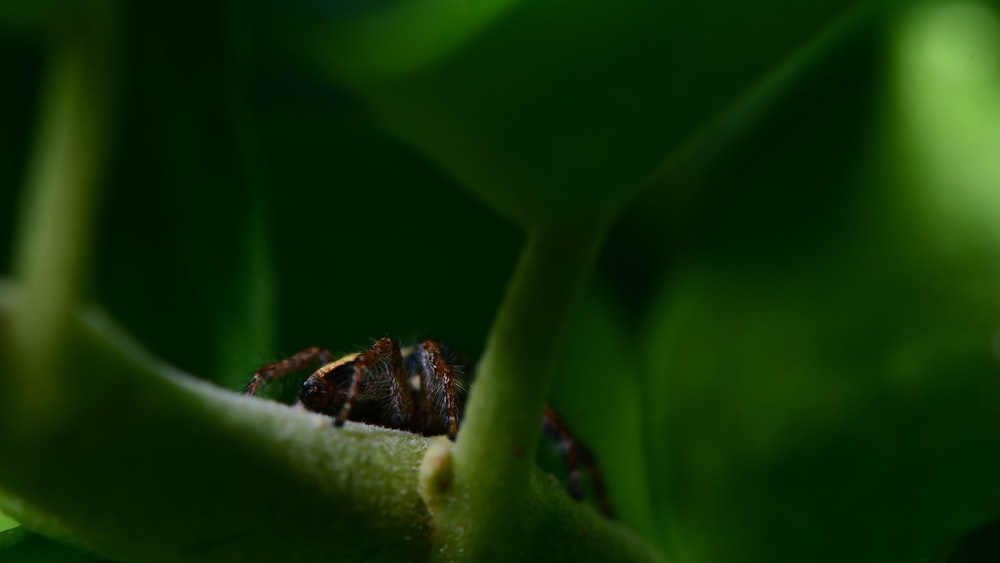 brown and black bee on green leaf