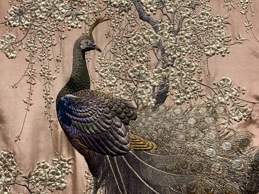 blue green and black peacock on brown dried leaves