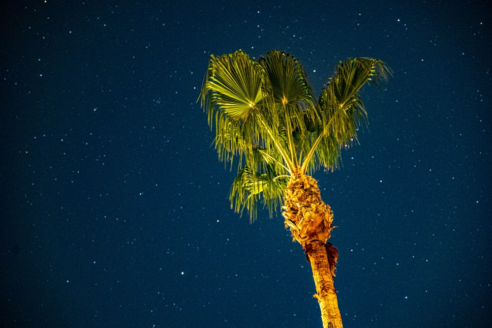 green palm tree under blue sky during night time