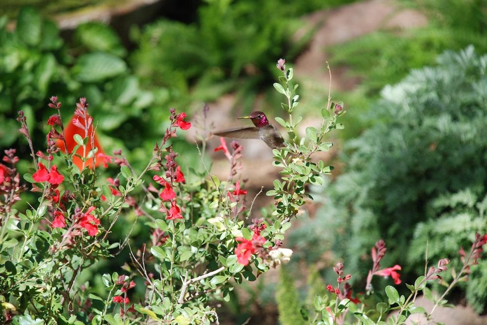 brown bird on red flower
