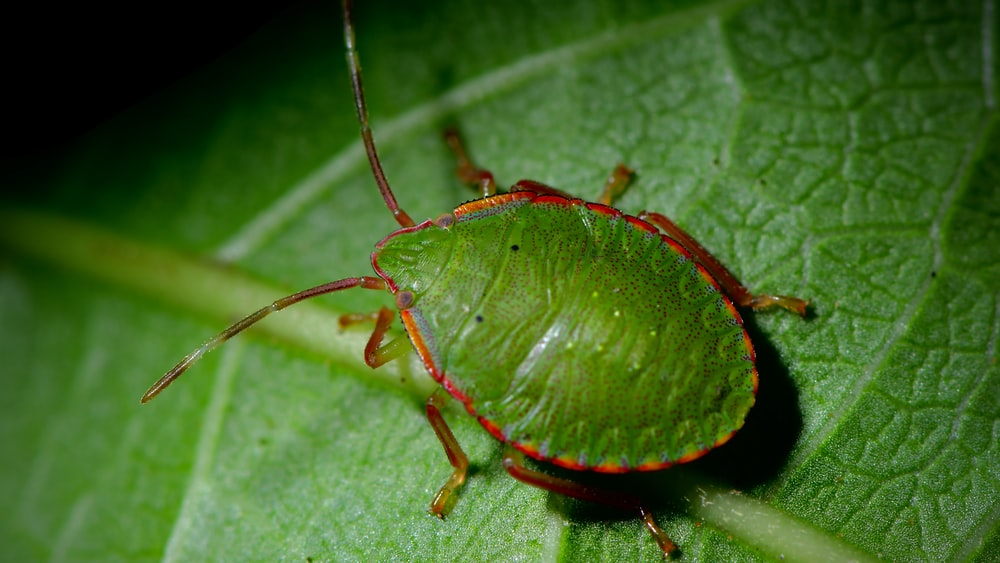 green and brown bug on green leaf