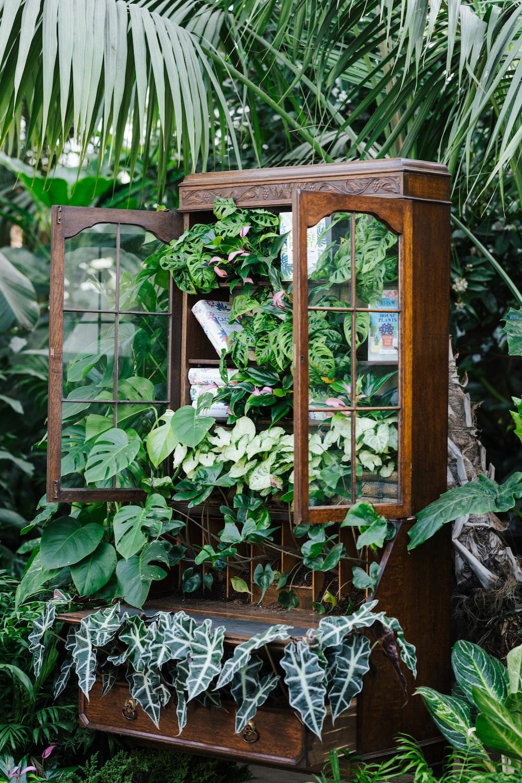 green plants on brown wooden framed glass window