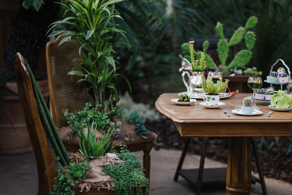 green potted plant on brown wooden table