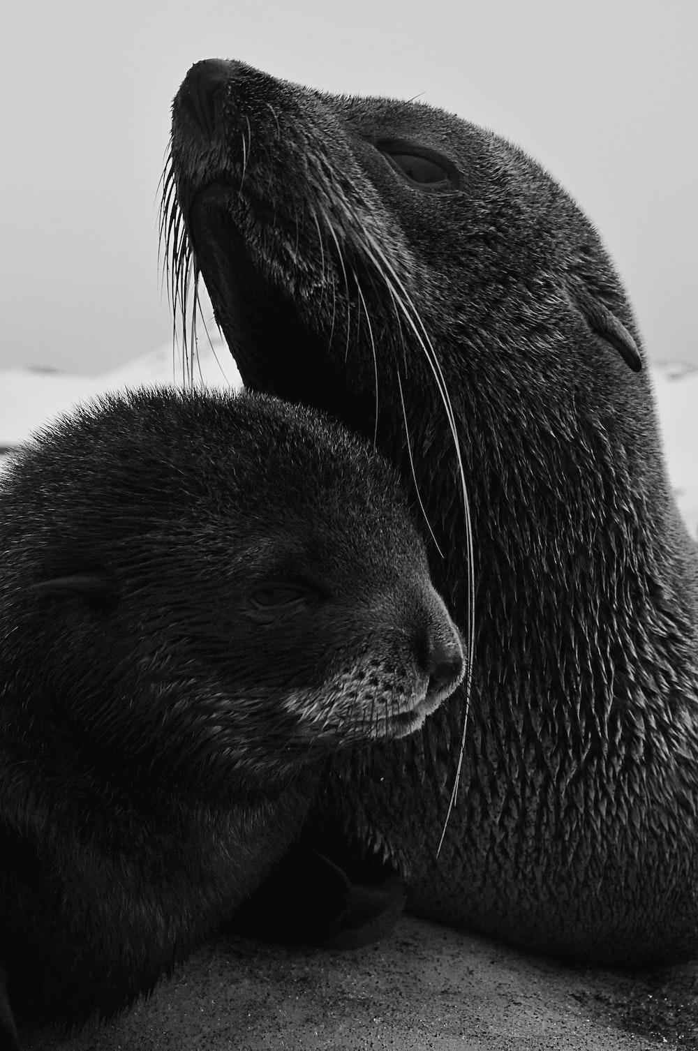 black seal on white sand during daytime
