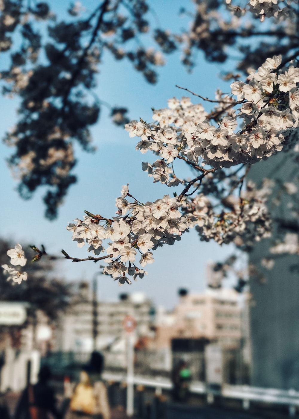 white cherry blossom in selective focus photography