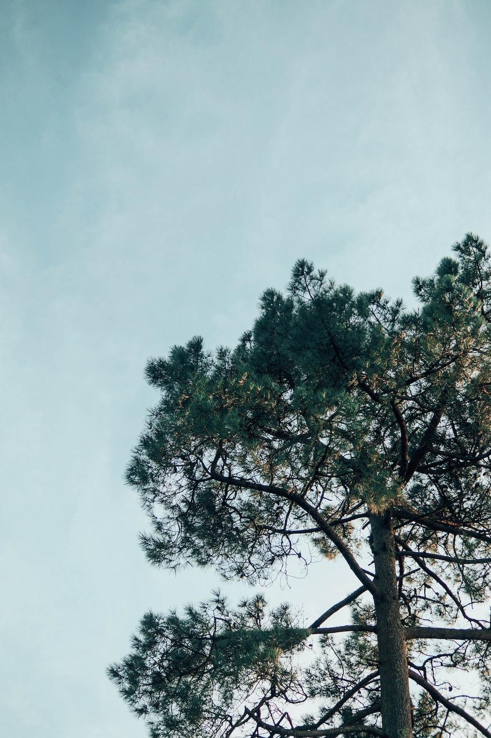 green tree under white sky