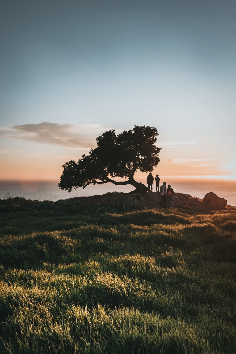 silhouette of tree on green grass field during sunset
