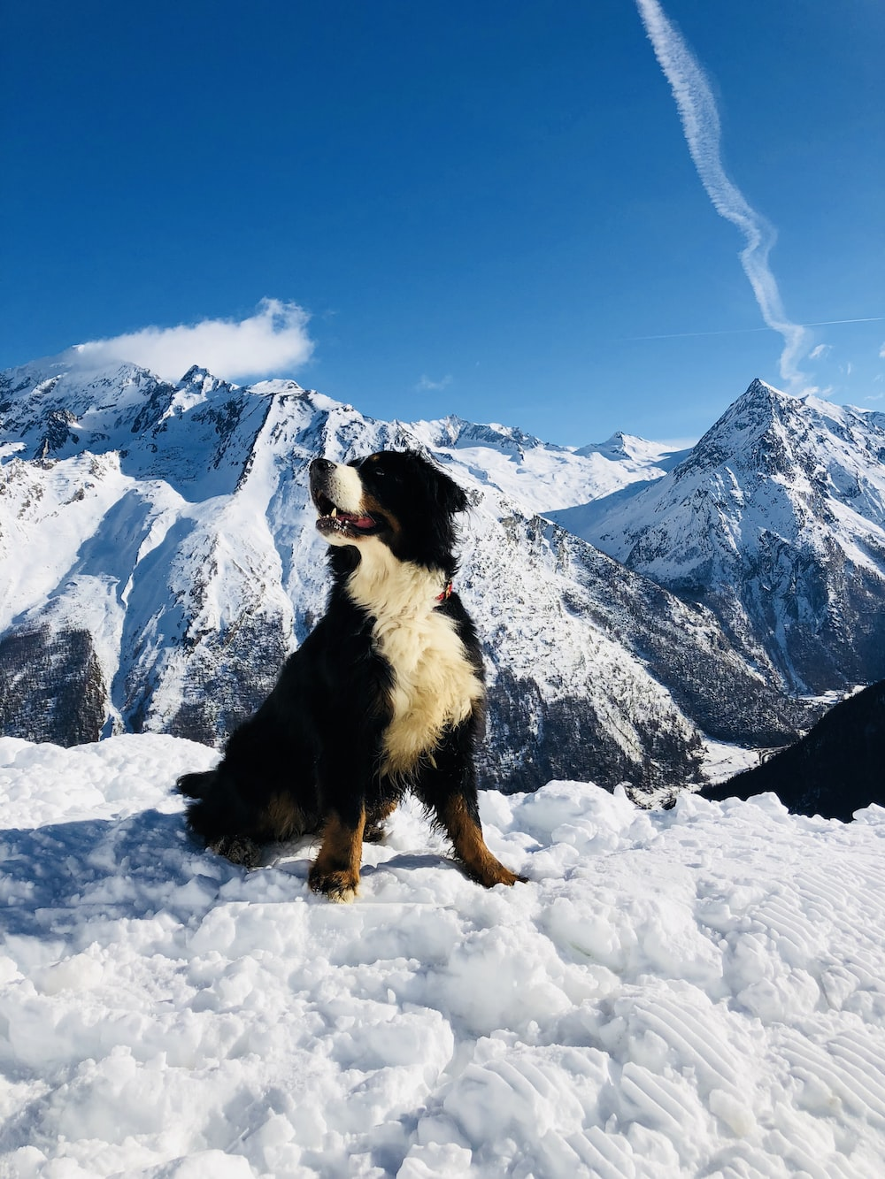 black white and brown bernese mountain dog on snow covered ground during daytime