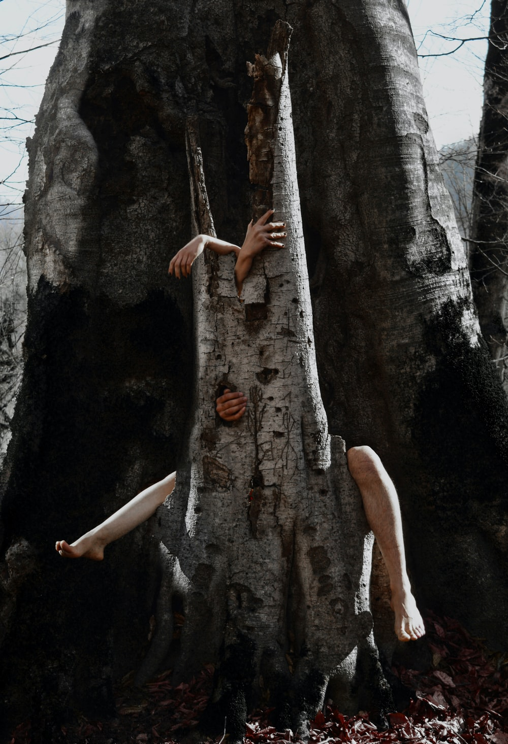woman in white panty climbing on brown tree