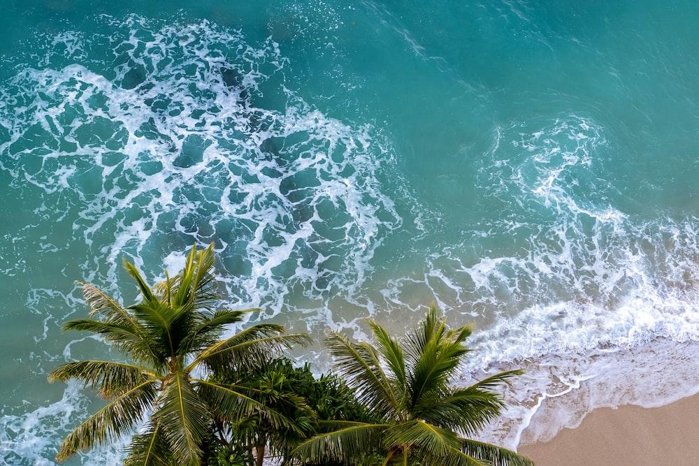 green palm tree on white sand beach
