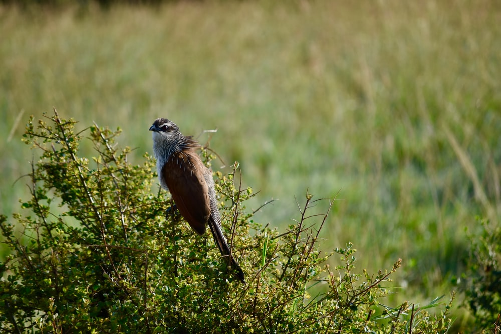 brown and black bird on brown grass during daytime