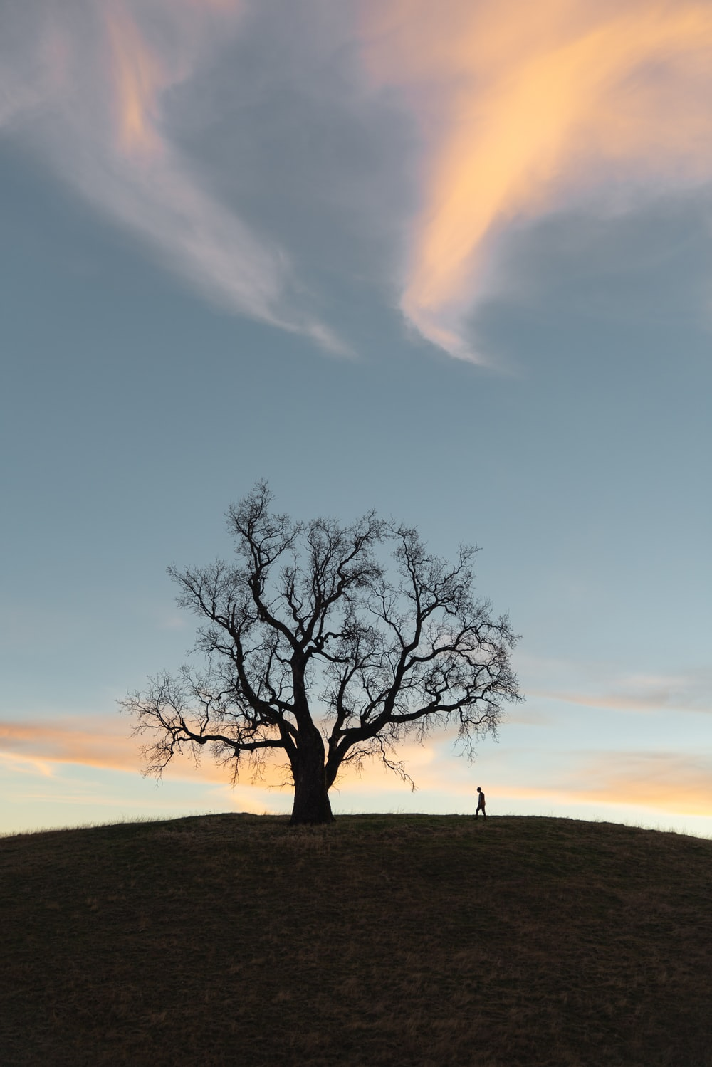 leafless tree on green grass field under blue sky during daytime
