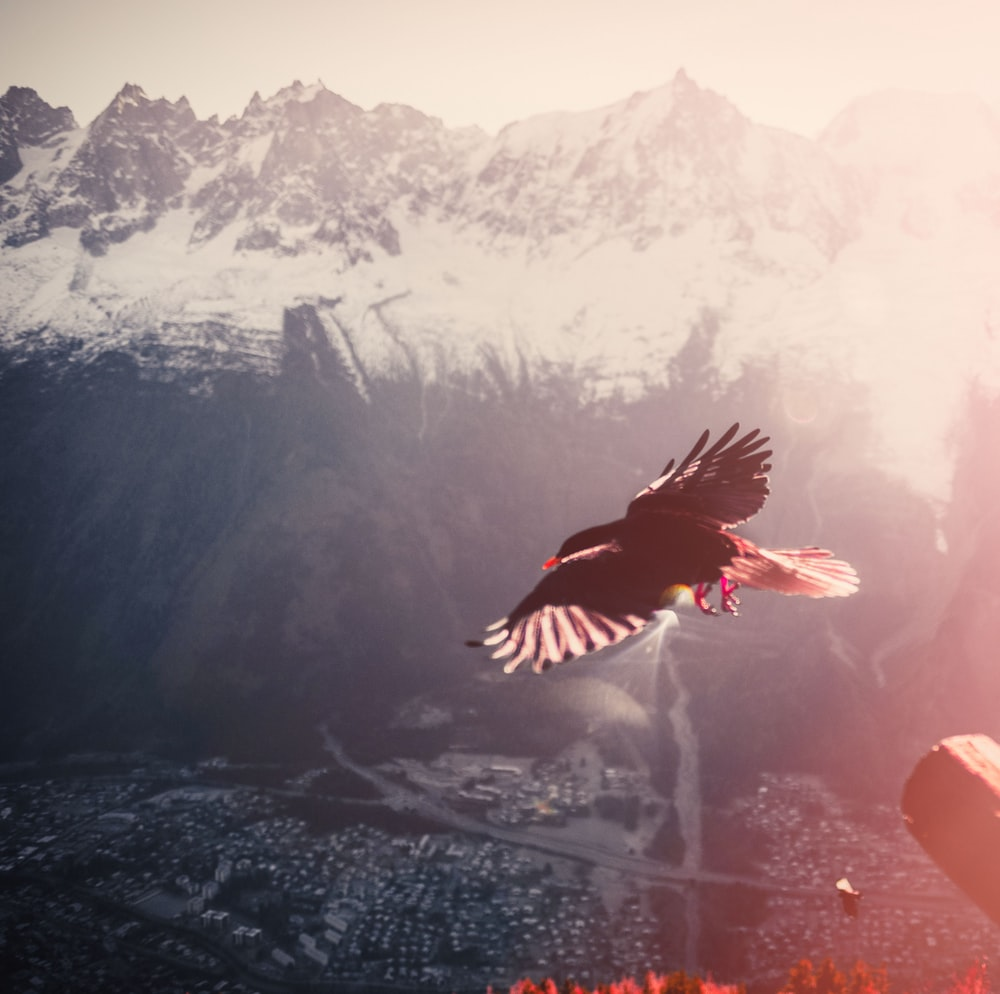 black and white bird flying over the mountain during daytime