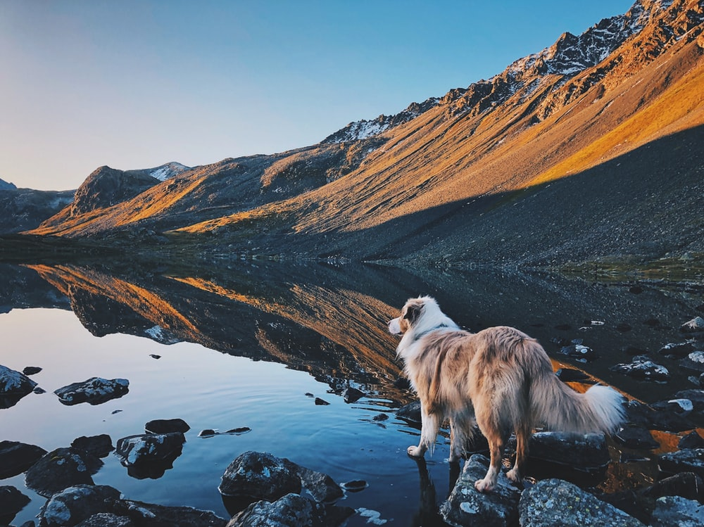 white and brown long coated dog standing on rocky ground during daytime