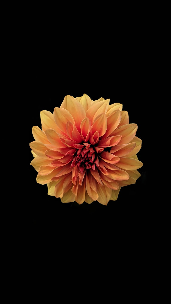 A Gunslinger's Withered Flower