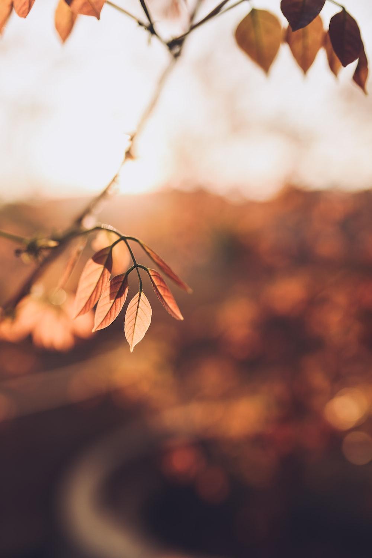 brown leaves in tilt shift lens