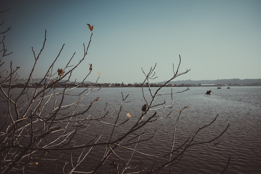 leafless tree on body of water during daytime