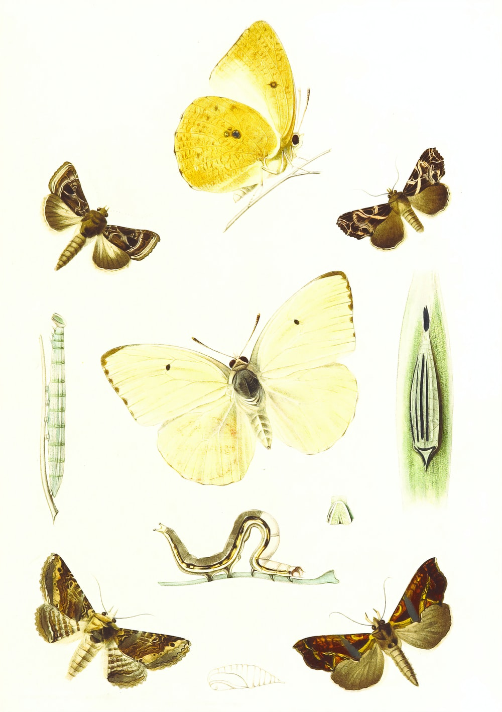 yellow butterfly and butterfly illustration
