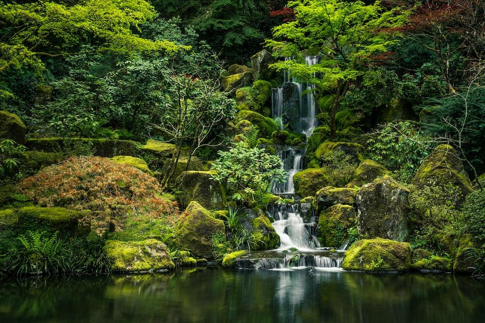 green moss on rock formation near water falls