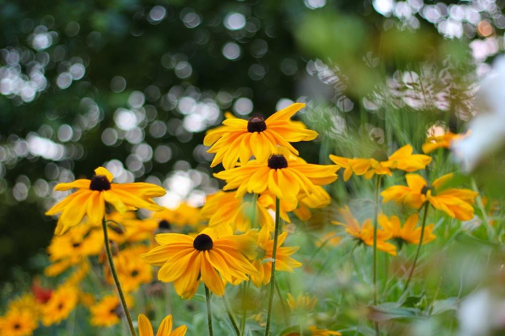 yellow flowers in tilt shift lens