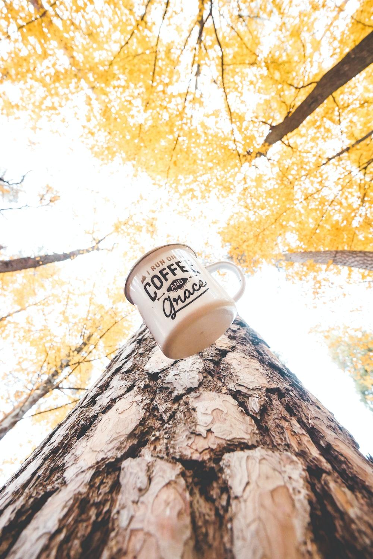 white ceramic mug on brown rock