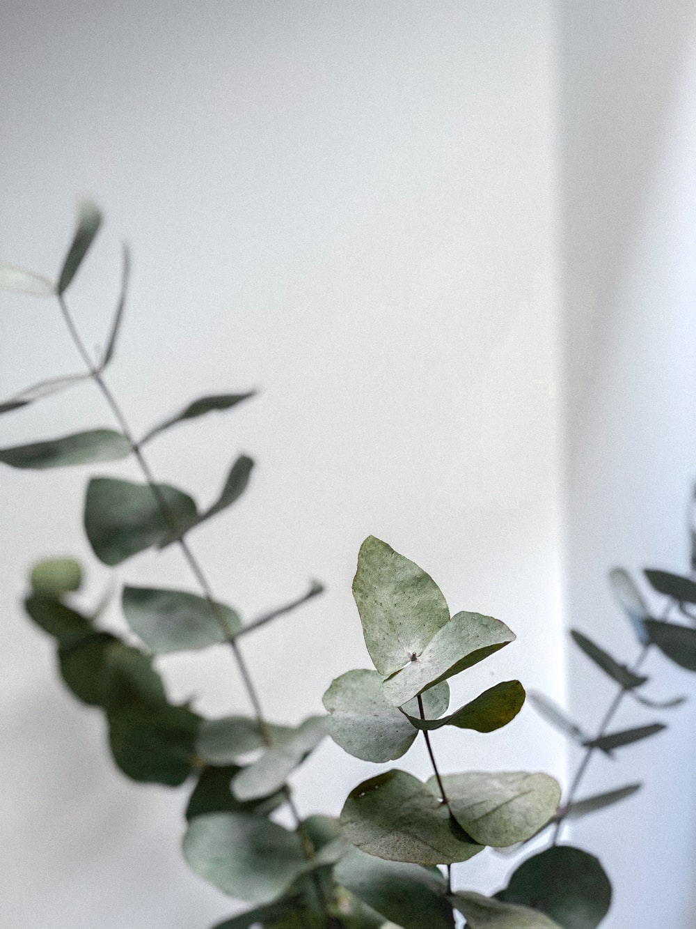 green leaves on white surface