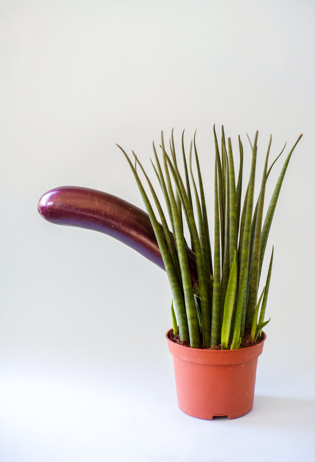 A plant with eggplant sticking out from grass looking like penis in erotic context. Unporn.
