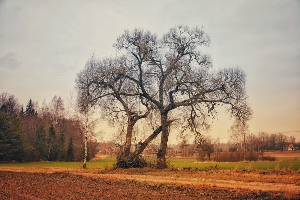 leafless tree on brown grass field