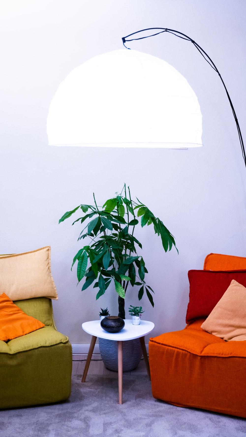 green plant on white ceramic plate