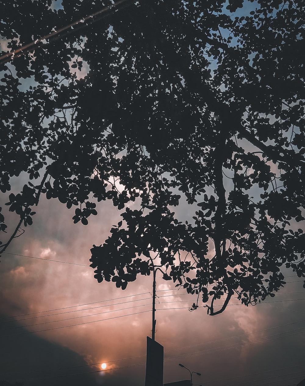 green tree under orange sky