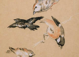 brown and white bird print textile